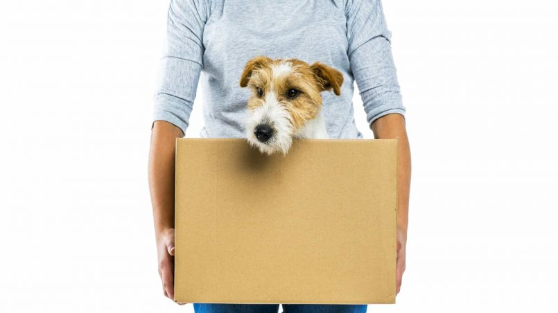 How to Prepare Your Pet for Moving House